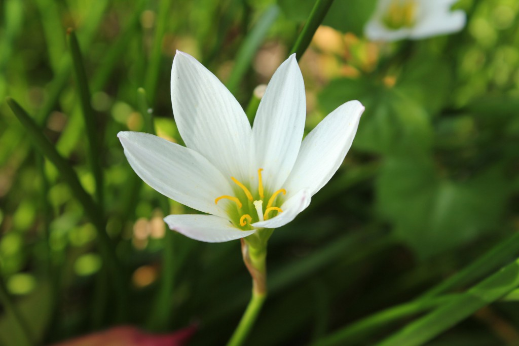 single-white-flower